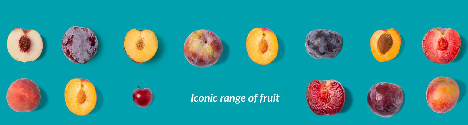 Icon Fruit - Fruit Export Specialist
